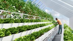 Edenworks, a Stacked Farming Venture, Grows in Industrial Brooklyn: Brooklyn-based rooftop greenhouse Edenworks gears up in an attempt to fix the food supply chain rather than change consumer behavior.