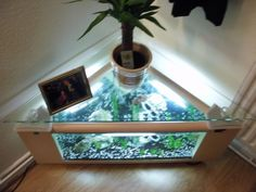 Original fish tank coffee table perfectly overcame in home interior. Aquarium mounted at coffee tables, if the apartment is not enough space.