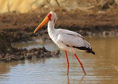 KENYA - Part 1 - Levels-birder