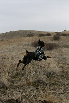 I love both this photo and these dog sweaters! (hoverfly.etsy.com)
