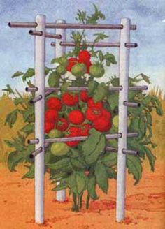 Gardening Tomatoes Homemade Tomato Cages Indestructible Tomato Cage - Who needs store-bought tomato cages? You can build your own sturdy, low-cost tomato cages and trellises with these four terrific designs. Garden Yard Ideas, Lawn And Garden, Garden Projects, Pvc Projects, Big Garden, Garden Hose, Garden Beds, Garden Plants, Organic Gardening