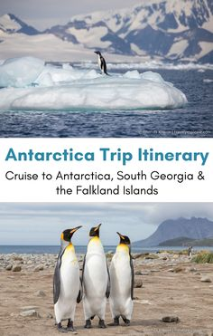 Antarctica Trip Itinerary- Cruise to Antarctica, South Georgia & Falkland Islands- what you can see on an Antarctic expedition cruise to Antarctica, South Georgia and the Falkland Islands. Full itinerary and video included! Travel Guides, Travel Tips, Travel Hacks, Travel Packing, Travel Essentials, Packing Lists, Budget Travel, Antarctica Cruise, Cruise Travel