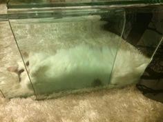 lasipöydän alla