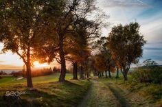 Autumn alley - Autumn alley during golden hour