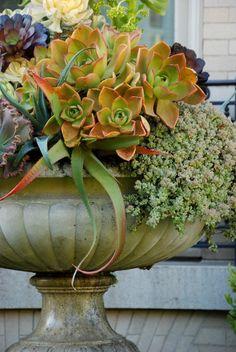 Succulents en masse in urn