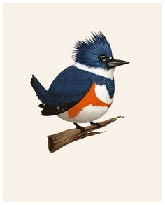 Mike Mitchell - Belted Kingfisher  http://www.sirmitchell.com/
