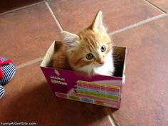 I_Fit_In_This_Tiny_Box