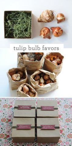 DIY Tulip Bulb Wedding Favors {via Project Wedding}