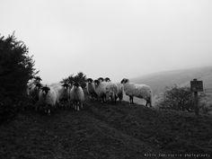 Tom Norris Photography