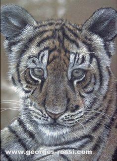 tigron du Bengale....pastel/carton  cp www.georges-rossi.com