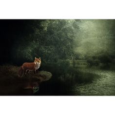 Sale 20% off Fox nature photo, fine art photo, Fox art print, dark... ($12) ❤ liked on Polyvore featuring home, home decor and wall art