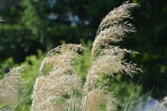 Dry grass. Grass, Dandelion, Flowers, Plants, Photography, Photograph, Photography Business, Flora, Photoshoot