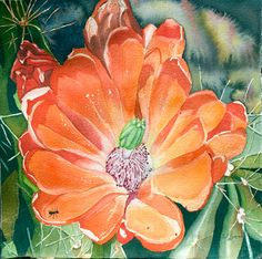 Orange Green Claret Cup Cactus WATERCOLOR PAINTING by sherrykimmel, $25.00