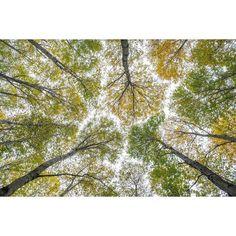 Autumn Prespective #autumn #travel #igtravel  #earth #awesomeearth #earthpix #woods #nature  #ilovetravel #earth_shotz #earth_expo #cornwalluk #getaway #travelpics #osprey #fujifilm #worldcaptures #trees #landscape #landscapelover #ig_landscape #naturelover #landscape_lover #landscape_captures #landscape_hunter #igerscz #fujifilm #fujistask #kvalitnifotky #leaves
