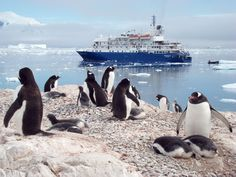 Corinthian II in Antarctica Small Ship Cruises, All Inclusive Cruises, Cruise Holidays, Corinthian, Cruise Vacation, Antarctica, North Africa, Greek Islands, Sicily