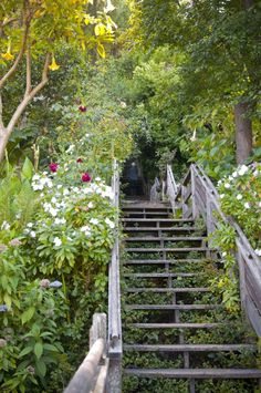 Somewhere in the middle of the steep climb up Filbert Street Steps to Coit Tower, you might begin to wonder if it's worth the trouble. Well,...