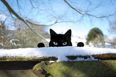 Peeping Tom Metal Garden Cat - Cat Ornament for Plant Pot, Lawn, Post or Fence  This Peeping Tom Cat lives in your garden - in the ground, in a plant