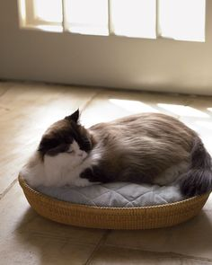 Make a cosy bed inside a basket for your cat, with an electric pet-bed warmer sandwiched between the cushions for those extra cold months.