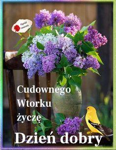 Mega Sena, Good Morning, Tuesday, Plants, Disney, Adhesive, Messages, Polish, Pictures