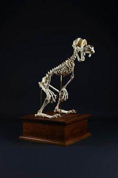 Lee s'amuse à reconstituer les squelettes des héros de cartoons les plus emblématiques Dingo