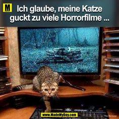 Katze Horrorfilme
