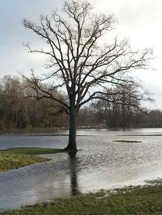 Unter Wasser Winterhochwasser Winterschlaf Fluss Schleswig-Holstein Norddeutschland