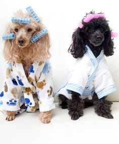 These totally gay dogs in their pajamas and hair curlers. | 27 Things That Are Gay According To Stock Photos