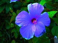 Kalia a tropical flower..so beautiful