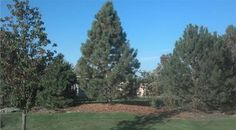 New location of tree while Crown Point, Specimen Trees, Tree Transplanting, Shades, Landscape, City, Illinois, Plants, Commercial