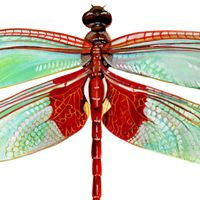 red dragonflys - Google Search