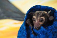 Un bébé vampire bien au chaud dans une couverture | Daily Geek Show