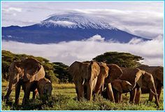 Book Singles Safari and Mount Kilimanjaro singles hiking trip with Erik's Adventures – The best African Safari trip