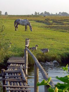 Gosh this is quite a bit like my dad's place.. there's a stream that dries up most of the time but is like an underground spring on the way to the east pastures and the cottonwood trees next to the pond. I can walk that farm in my mind as if I were right there. Beautiful