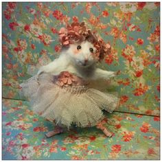 Mouse Card Ballerina Floral by sparrowsongs on Etsy Cute Animal Memes, Cute Funny Animals, Funny Animal Pictures, Cute Rats, Cute Hamsters, Funny Mouse, Pet Mice, Cute Little Animals, Cute Cartoon Wallpapers