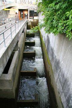 Seattle Locks & Salmon Ladder....I
