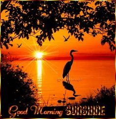 gif by Good Morning Coffee Gif, Cute Good Morning Quotes, Good Morning Cards, Morning Gif, Good Morning Picture, Good Morning Love, Good Morning Messages, Good Morning Greetings, Morning Pictures