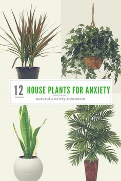 - 12 Most Powerful House Plants for Anxiety and Stress Natural anxiety treatment, anxiety tips, anxiety tools to alleviate anxious symptoms. House plants for anxiety are the best way to clean the air and your mind.