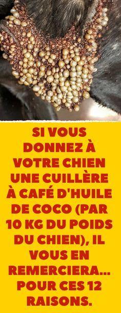 12 bonnes raisons de donner de l'huile de coco à votre chien