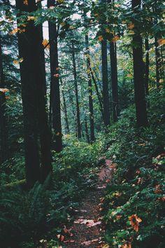 """hannahkemp: """" Along the Trail//Washington October 2015 """""""