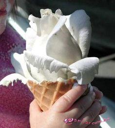 rosa de sorvete real