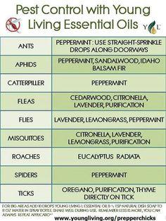 Pest Control with Essentional Oils