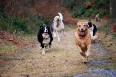 Happy Dogs Hiking at Happy Dogs Walking Service