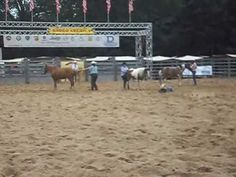 Zirkusshow beim Rodeo Köln - circus show at the rodeo in Cologne Circus Show, Natural Horsemanship, Rodeo, Cologne, Bull Riding, Rodeo Life