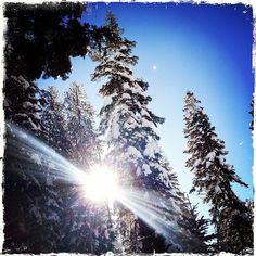 #tahoe - @marzeedotes- instagram