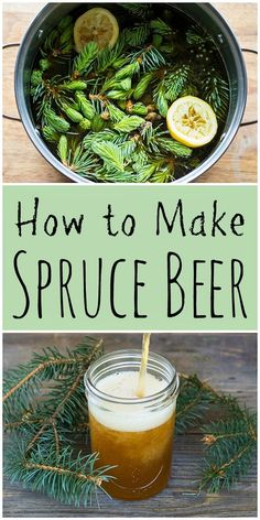 This delicious and refreshing spruce beer recipe is easy to make and uses foraged spruce tips or any other edible conifer needles. #spruce #beer #sprucebeer #homebrew #fermenting #fermentation #onegallon #foraging #sprucetips