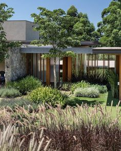 Design by Garden for a country House in Brazil Photo by Plant Tropical Architecture, Landscape Architecture, Ornamental Grasses, Water Plants, Garden Inspiration, Garden Ideas, Garden Styles, Deco, Garden Landscaping