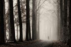 Фотография Gone in a few Sec VI автор Lars van de Goor на Green Trees, Pathways, Time Travel, Mists, Amazing, Nature Photography, Waterfall, Beautiful Places, Country Roads