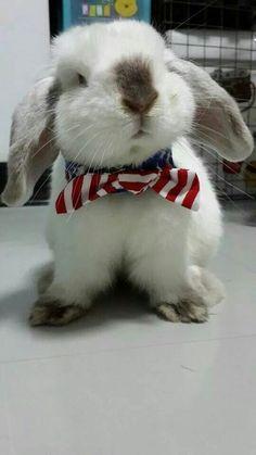 Joli petit lapin blanc avec son bandana