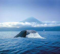 Rundreise: Whale and Dolphin Watching - Rundreisen Portugal bei OLIMAR Reisen.