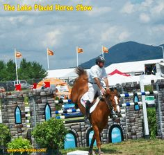 Winter Olympics, Show Horses, Beautiful Horses, Day Trips, Spring Time, Winter Olympic Games, Pretty Horses, Race Horses
